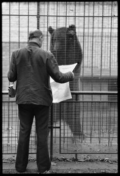 Man reading newspaper to grizzly bear. Henri Cartier-Bresson. France. Nord. Lille. Bois de Boulogne, 1976.   In 1931, Cartier-Bresson began to use a camera and to make photographs that reveal the influence of both Cubism and Surrealism—bold, flat planes, collage-like compositions, and spatial ambiguity—as well as an affinity for society's outcasts and the back alleys where they lived and worked.  Homme lisant le journal de l'ours grizzli. Henri Cartier-Bresson. France. Nord.