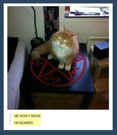 The Yellow-Eyed Demon makes an interesting vessel choice. Who expects a demon to be in a cute, fluffy cat hahaha for the demon cat. This is a devils trap (supernatural) Castiel, Crowley, Sam Winchester, The Meta Picture, Supernatural Memes, Fandoms, Fluffy Cat, Super Natural, Supernatural