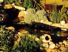 No podrán faltar flores y nenúfares sobre el agua. Puedes colocarlos sobre los estanques, piscinas, boles transparentes o cubos de madera.