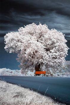 Relax by Maria Kaimaki (infrared photo)