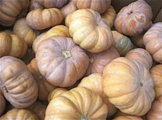 December Fruits and Vegetables From Beets to Winter Squash: Cheese Pumpkins (a.k.a. Cinderella Pumpkins)
