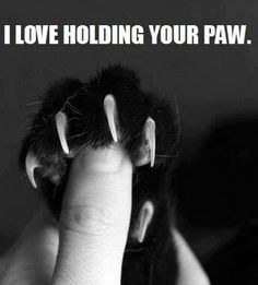 #sweet #cute #cat #paw