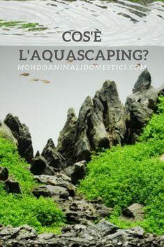 Aquascaping, Zen, Relax
