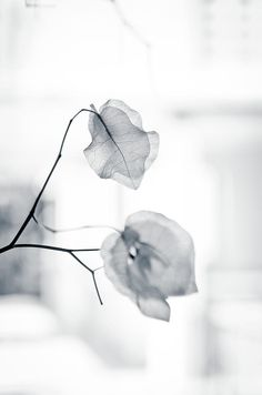 high key photo, leaf texture. #photography Black and white