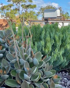 Spoons, Planting, Blue Green, Landscapes, Copper, Autumn, Projects, Instagram, Paisajes