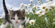 Sweet kitten ❤