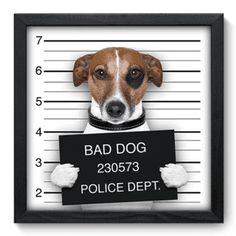 Quadro Decorativo - Bad Dog - 048qds