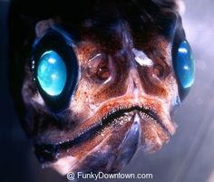 Zombie Fish (Just kidding I have no idea what this is)