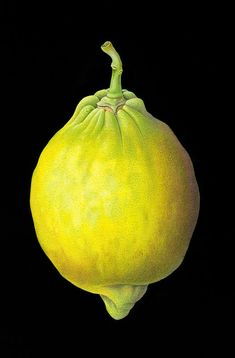 """Lemon - Susannah Blaxill 