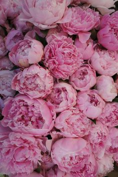 peonies. i believe these are my favorite flower. officially.