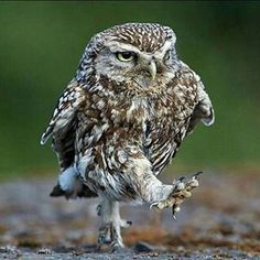 The completely new you, with your freshly turned around life, walking to the bar. | 24 Owls That Are 100% You