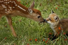 Love it! A baby deer and baby fox meet in a field