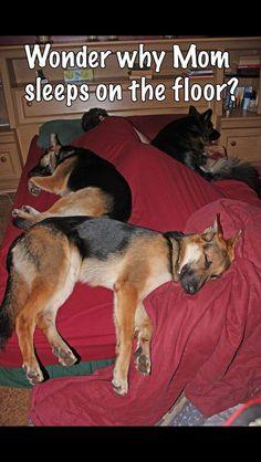 Sleepy doggies