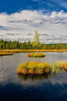 August 2015 Chalupská slať, Šumava, Czech republic Swamp lake in highmoor Chalupská slať is the biggest in country with hectars and. Prague Spring, Places To Travel, Places To Go, Easy Jet, Cheap Flight Tickets, Phuket, Solo Travel, Czech Republic, The Great Outdoors