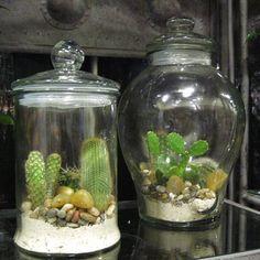 Terrario cerrado con cactus