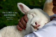 The Lord is my shepherd...and I'm pretty happy about it! (o: