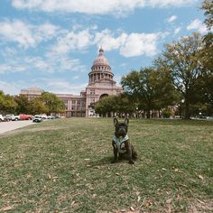 Dolly out and about on a sight seeing trip in Austin.