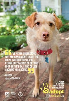 #adopt #pets #family - adorable caption!
