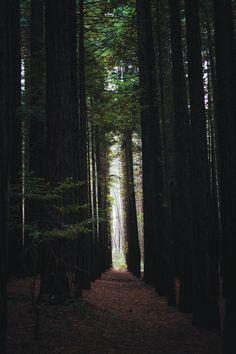 East Warburton Redwood Forest, AustraliaTumblr | Instagram | Website | Shop