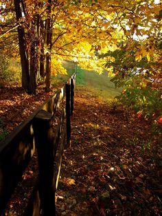 Autumn Fence, Charlottesville, Virginia  photo via mrsschamltz