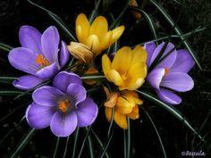 ~~ It's spring :) ~~