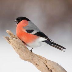 black, white, gray, orange - pink