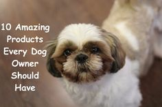 10 Amazing Products Every Dog Owner Should Have – Project Pawsitivity Dog Care, Dog Owners, Mans Best Friend, Best Friends, Your Dog, Pets, Helpful Tips, Dog Breeds, Amazing