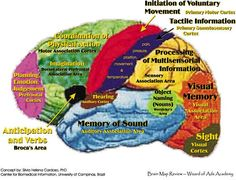 Parts of the brain- really like this mapping!!