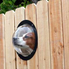 Dog Peep hole