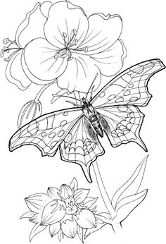 *Butterfly Stands On A Plant - printable pattern...no copyright ...meant for colouring book but would make a lovely outline stitch embroidery.