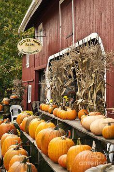 autumn farm stand, Connecticut   John Greim, Fine Art America