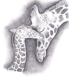 Giraffe Drawing | Giraffe drawing. | posters and art