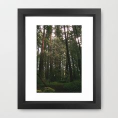 Redwood Fairy Tale Framed Art Print by Amy J Smith Photography - $37.00