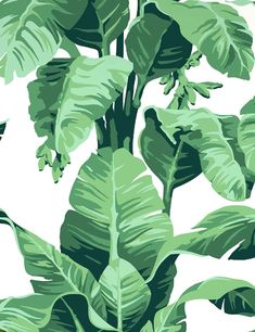 Pacifico Palm Wallpaper by Nathan Turner, Peach - Wallpaper - Wall Decor Artistic Wallpaper, Modern Wallpaper, Home Wallpaper, Bedroom Wallpaper, Large Print Wallpaper, Chill Wallpaper, Wallpapers Ipad, Cute Wallpapers, Aesthetic Backgrounds