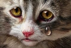 Do Cats Cry ??