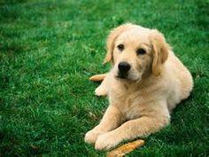 mascotas - Resultados de Yahoo España en la búsqueda de imágenes