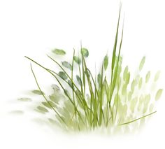 skrap_klipart - «NLD Grass 2.png» on Yandex
