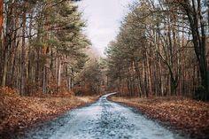 Herbst, Wald, Landschaft, Natur