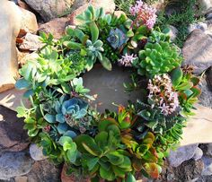 Like other plants, succulents still need nutrients, so they will not grow well in a mixture made entirely from sand and gravel. Description from kendrascreationsandinspirations.blogspot.com. I searched for this on bing.com/images