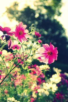 Een struik met roze bloemen.