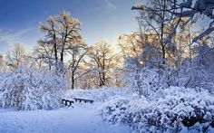 Heavy snow in the forest wallpaper