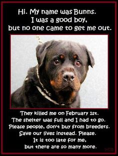 Rescue ~ Adopt, DON'T shop!!! It is too late for me, but there are so many more.