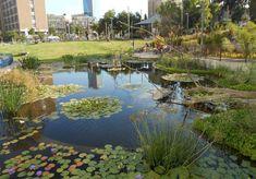 06-lily-pond.jpg