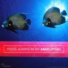 You'll always be my angel(fish).