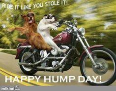 Happy Wednesday Everyone!