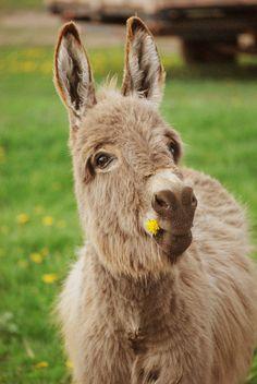 Classy donkey