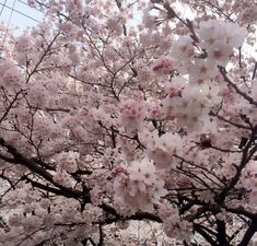 Uploaded by Find images and videos about love, pink and nature on We Heart It - the app to get lost in what you love. Spring Aesthetic, Nature Aesthetic, Flower Aesthetic, Aesthetic Photo, Japanese Aesthetic, Tumblr Photography, Cool Plants, Land Scape, Beautiful World