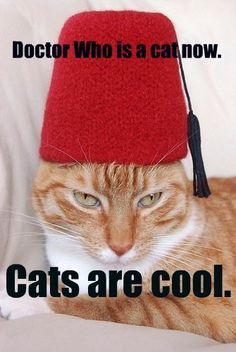 cats + doctor who = fantastic
