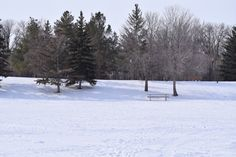 Garden King, Chinese Pagoda, Pagoda Garden, Dog Area, Kings Park, River Trail, Winter Pictures, Dog Leash, Picnic Table