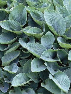 The Best Shade Loving Plants - Plants For Shade : HGTV Gardens